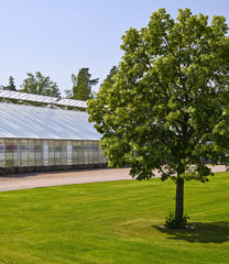 Tree and glasshouse