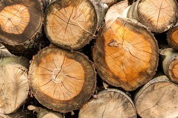 Holzstamm aufgestapelt