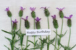 Happy birthday card with fresh lavender