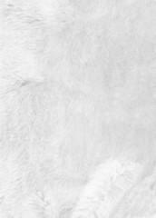 White fur background. Closeup