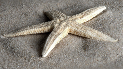 Sea Star washed up by the tides