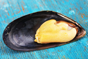 Mussel in shell on blue wooden table