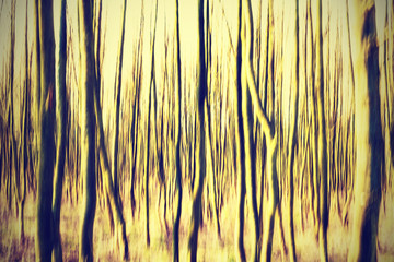 Motion blurred forest retro background.