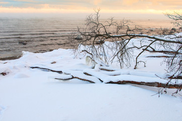 Baltic winter fjord landscape with tree