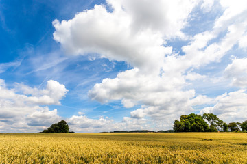 Beautiful landscape - field and blue sky