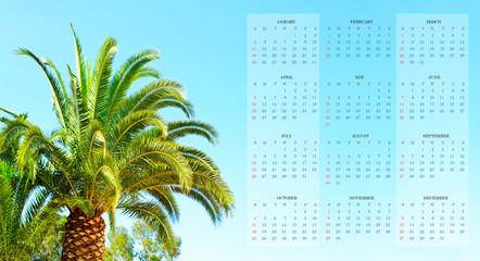 Palm against blue sky