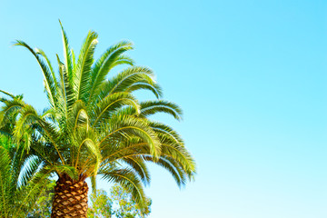 Palm Against Blue Sky Background.