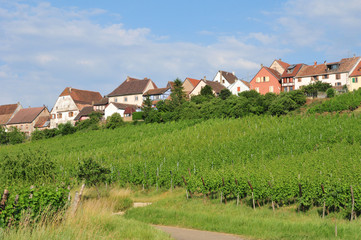 Haut Rhin, the picturesque city of Zellenberg in Alsace