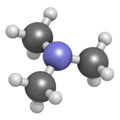 Trimethylamine volatile tertiary amine molecule.