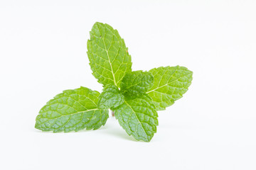 Thai fresh mint close up on white background