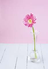 pink gerbera in glass vase on white wood