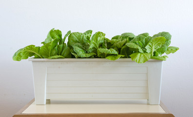 Homemade hydroponic vegetables