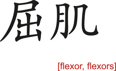 Chinese Sign for flexor, flexors