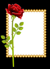 red rose and greeting-card