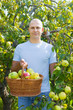 Middle-aged man with apple harvest