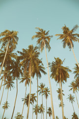 Palm trees at tropical coast, vintage toned