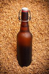 Beer bottle stand in the heap of beer barley