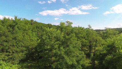 Up  over wood  trees   .Aerial  in sunny day