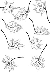 nine maple black leaves illustration