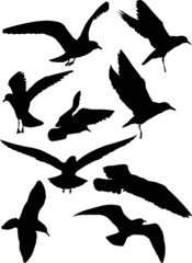set of eight gull black silhouettes
