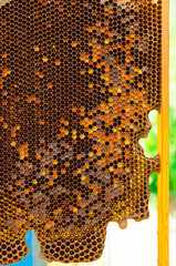 Honeycomb in hive