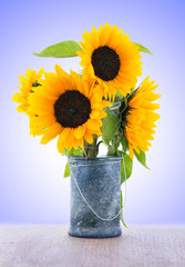 Sunflower isolated on colorful background