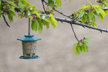 Bird feeder box full of seeds