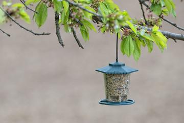Bird feeder box full of seeds