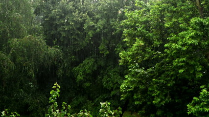 Heavy rain falling in the park, trees in the background.