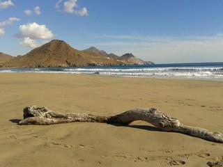 Spiaggia deserta con tronco di albero