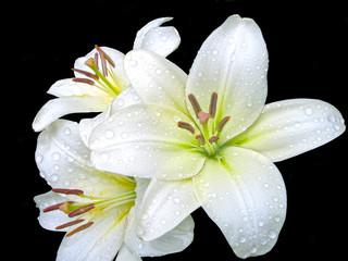 Белые лилии на черном фоне
