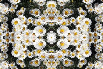 Kaleidoscope Daisies Pattern