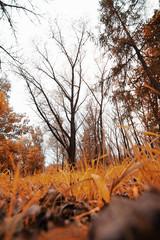 Park late autumn