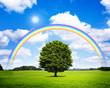 Eiche mit Regenbogen