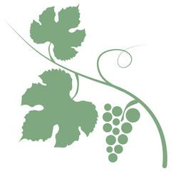 Weinrebe Weißwein