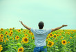 Man in the field of sunflowers