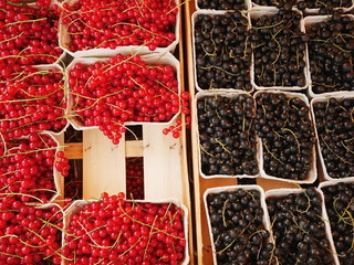 different berries market choice