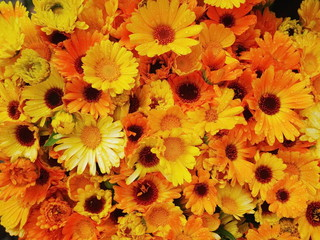 gerberas orange yellow