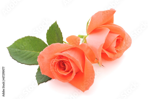 canvas print picture Orange Roses