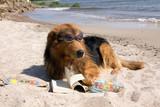 Fototapety Hund in den Sommerferien an der Ostsee