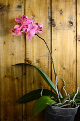 pink orchids on wood board