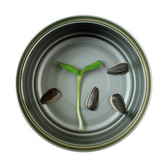 Organic green young sunflower sprout in cans