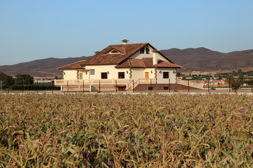 Farmhouse with artichoke plantation in foreground