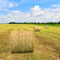 agricultural field with hay rolls
