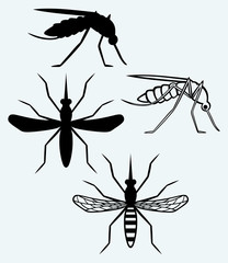 Silhouettes of mosquito