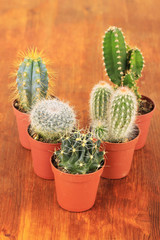 Collection of cactuses on wooden background