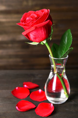 Beautiful red rose in vase on table on dark brown background