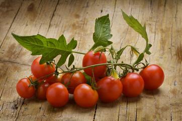 Solanum lycopersicum 토마토 Pomidor zwyczajny トマトPomodoro