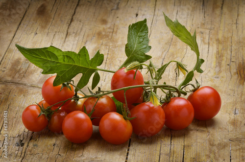 canvas print picture Solanum lycopersicum 토마토 Pomidor zwyczajny トマトPomodoro