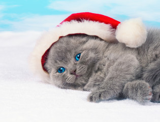 Little kitten wearing Santa's hat sleeping
